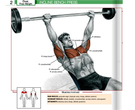 bench press works what muscles gym equipment guide for beginners names and pictures