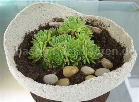 tische garten selbst gemachte betonkugel bepflanzt mit dachwurz deko