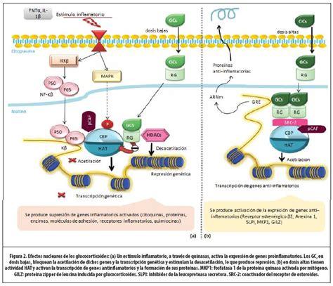 enfermedad de cadenas ligeras y pesadas complejo mediador