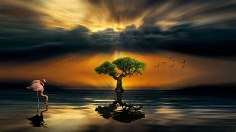 alone wallpaper hd desktop sunset dark cloud lake alone wood flamingos art hd