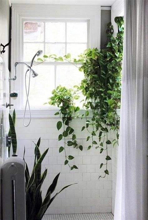 indoor plants that need little light what indoor plants need little light interior design ideas avso org
