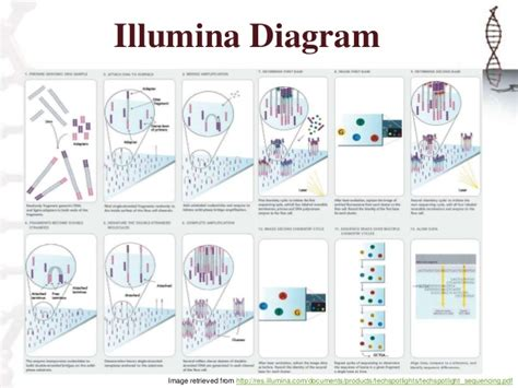 illumina sequence illumina sequencing