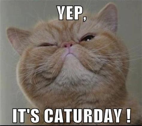 It S Saturday Meme - cat s scrappy retreats crops events it s caturday