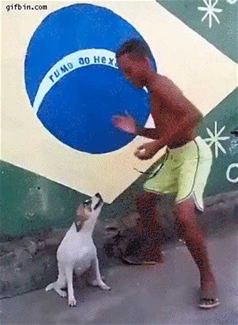 Dancing Dog Meme - dog dancing gif find share on giphy