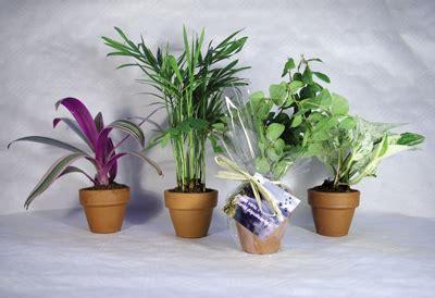 plante pour bureau 8 plantes d 233 polluantes pour le bureau plantes