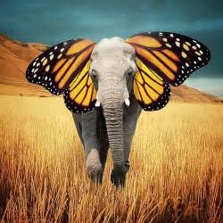 Elephant Shower Curtain Robert Jahns Surreal Photography My Artspiration