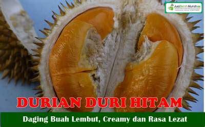 buah durian duri hitam jualbenihmurahcom