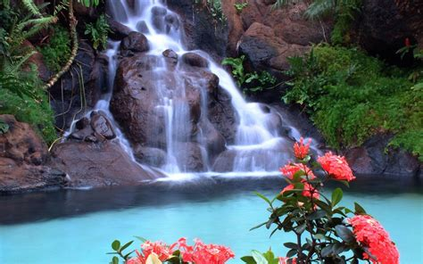 beautiful waterfalls with flowers beautiful flowers and waterfalls www pixshark com images galleries with a bite