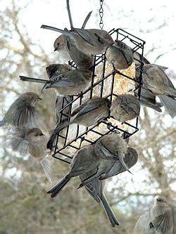 what to feed birds bird feeding tips including