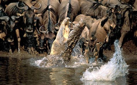 imagenes increibles national geographic curiosidades del mundo fotos de animales curiosas e