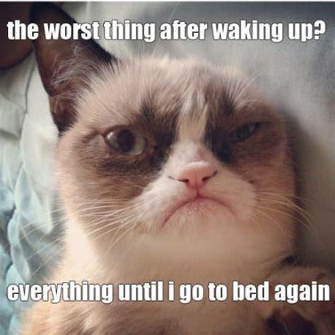Miserable Cat Meme - grumpy kitty grumpycat worst things tardar sauces