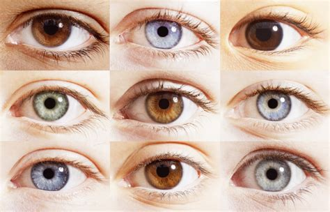 different types of eye colors iriogen 233 tica apetp