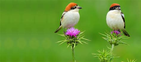 free download images of love birds amazing wallpapers amazing birds wallpapers high quality wallpapers