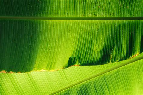 wallpaper daun full hd gambar alam menanam bidang sinar matahari bunga