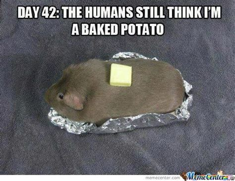 Humans Meme - silly memes image memes at relatably com