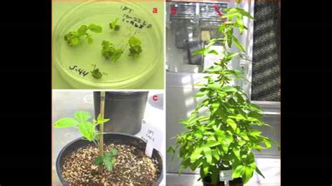 Plant And Biotechnology plant biotechnology