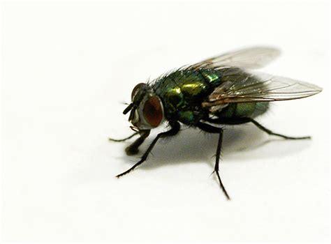Toxilat Racun Lalat 3 In One hebatnya lalat weblog cikgu jumali