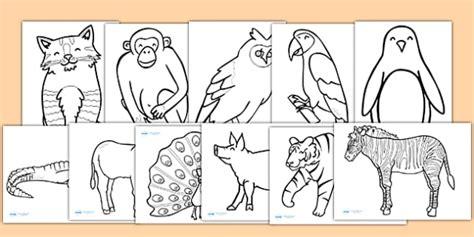 animal coloring sheets animal colouring sheets colouring sheets motor skills