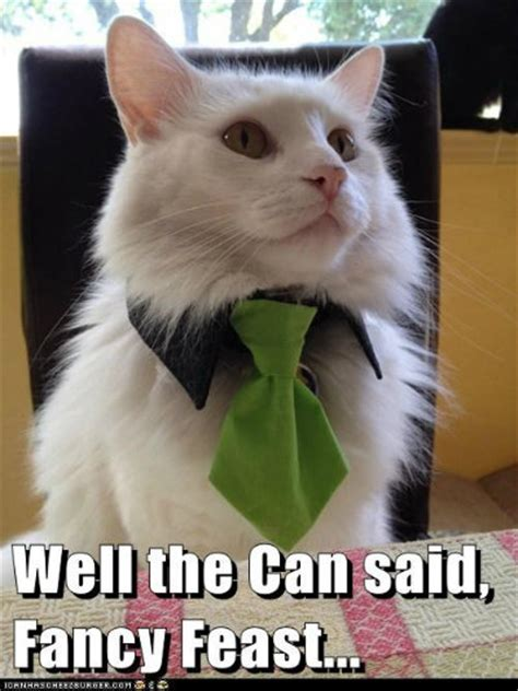 Fancy Cat Meme - more cat memes modern cat