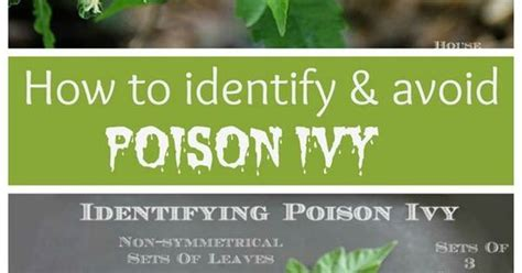 How To Detox If Ou Been Posioned by How To Identify And Treat Poison Poison And