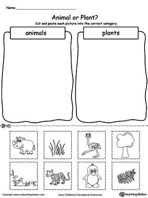kindergarten activities on plants preschool plants and animals printable worksheets