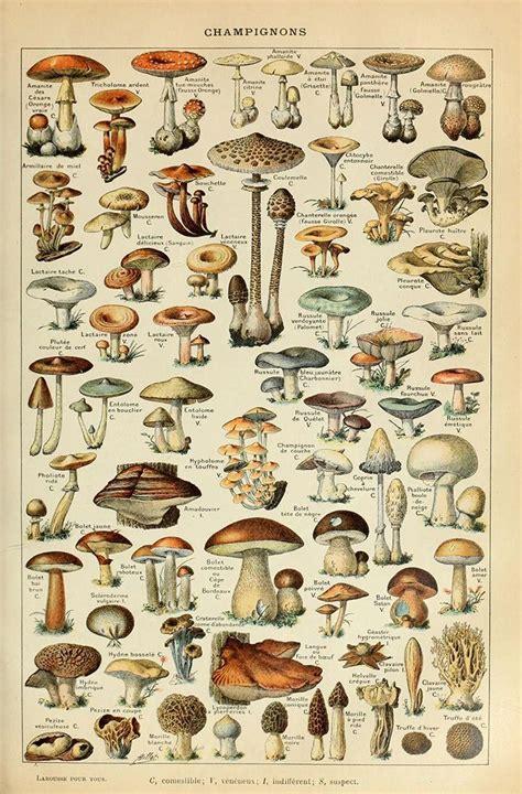cottagecore mushroom posters   aesthetics