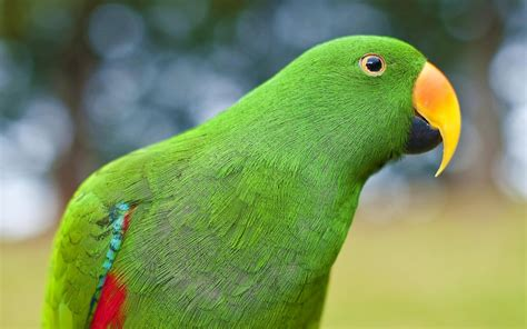 wallpaper of a beautiful green parrot