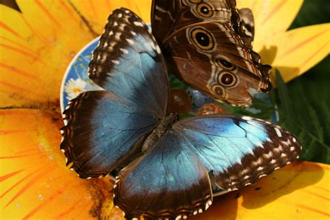 farfalle in casa casa delle farfalle bordano foto immagini animali