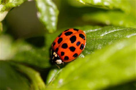 prevent garden pests  diseases howstuffworks