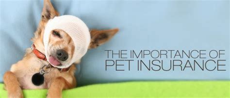 pet insurance best pet insurance 2017 in depth reviews of the top providers
