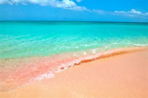 pink sand beach pink sand beach antigua barbuda wet pinterest