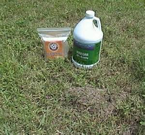 home ant remedy home remedies for killing ants