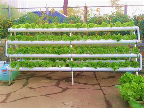 biaya membuat rumah hidroponik budidaya tanaman perhitungan estimasi biaya pembuatan