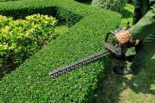 landscaping maintenance hedge trimming and shearing in toronto elite tree care
