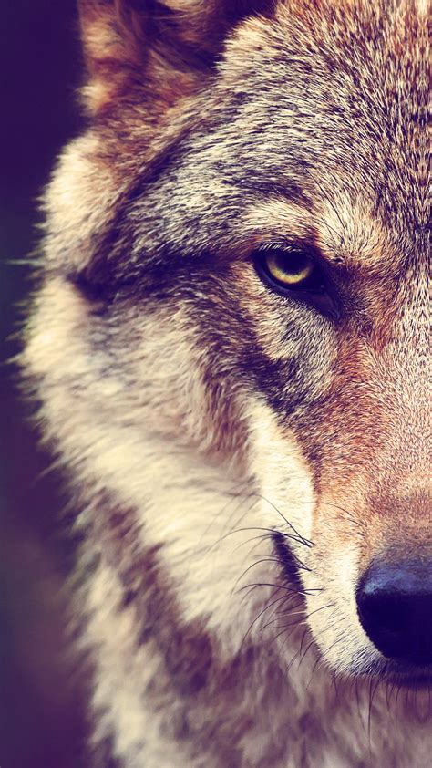 wolf wallpaper  iphone  pro max