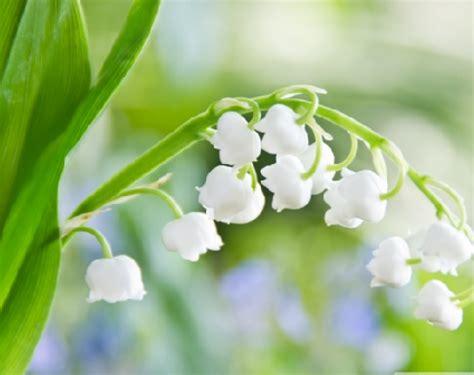 tanaman hias termahal  dunia