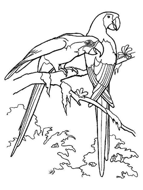 jungle birds coloring pages free coloring pages of birds of the rainforest