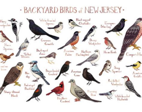 backyard birdsong guide ducks of north america field guide art print watercolor