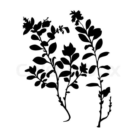 Free Small House Plans Vector Silhouette Of The Plant Of The Cowberry On White