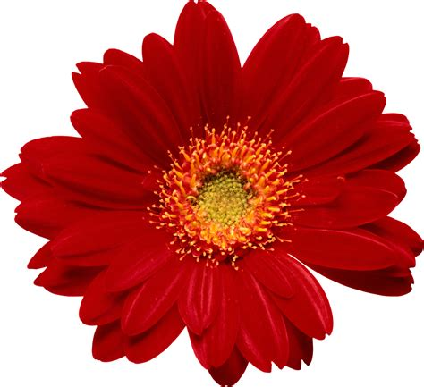 imagenes flores png marcos gratis para fotos flores png ramos etc renders