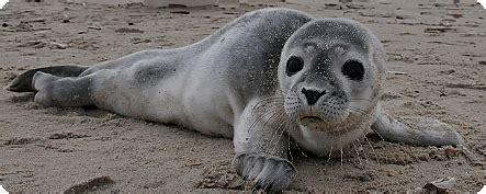 boot zeehond ameland dieren in nood wat kun je doen ameland vakantieland