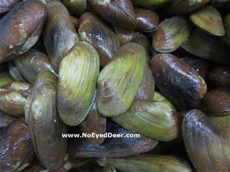 Bondarts Kerang Putih Anadara Ark Shell seafood restaurants types of mollucs clam shellfish