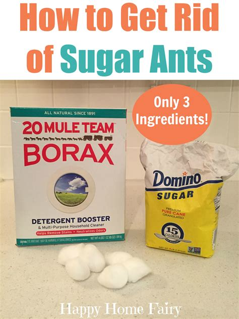 how to get rid of ants in the backyard how to get rid of sugar ants with just 3 ingredients