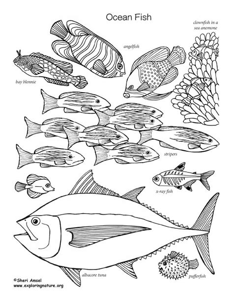 coloring pages ocean fish ocean fish labeled coloring nature