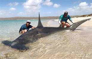 Can Blind People Swim Wa Fishermen Parade Sharks They Caught Standing On The