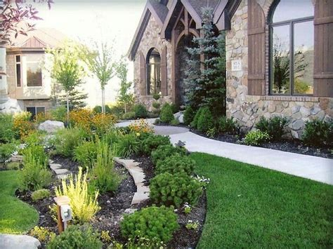 mugo pine in landscaping landscaping ideas