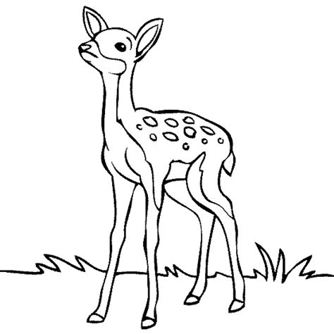 cartoon deer coloring pages cartoon deer drawings deer baby easy drawing how to