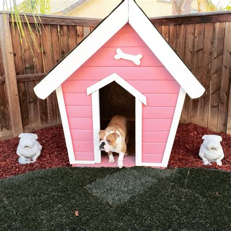 bulldog dog house chloe the english bulldog new custom dog house after giving us 7 beautiful puppies