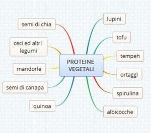 alimenti contengono proteine vegetali proteine vegetali gli alimenti pi 249 proteici casasuper