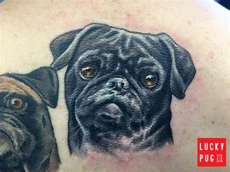 pugs buffalo ny shoulder pug tattoos back pug design photos